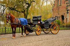 Безукоризненная лошадь и экипаж Брюгге Бельгия Стоковые Изображения