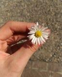 Безупречный цветок Стоковые Фотографии RF