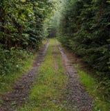 Безцельная торная дорога через темный лес Стоковые Фотографии RF