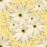 Безшовная бесконечная предпосылка флористическая Бело--yelliw цветки для дизайна и печатания Предпосылка естественных цветков Стоковая Фотография