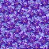 Безшовная бесконечная предпосылка флористическая Фиолетов-голубая лилия цветков для дизайна и печатания Предпосылка естественных  Стоковые Фото