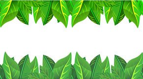Безшовная граница листьев лета и весны Стоковое Изображение RF