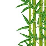 Безшовная граница с бамбуковыми заводами и листьями Стоковые Фотографии RF