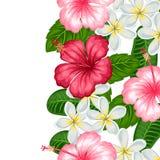 Безшовная граница с тропическим гибискусом и plumeria цветков Предпосылка сделанная без закрепляя маски Стоковое Изображение RF