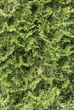 Безшовная зеленая изгородь в парке Стоковые Фотографии RF