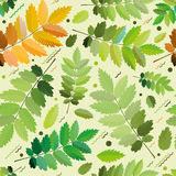 Безшовная зеленая листва для печатать Стоковые Изображения