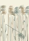 Безшовная камышовая предпосылка Стоковая Фотография RF