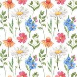 Безшовная картина акварели с полевыми цветками Стоковое Изображение