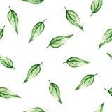 Безшовная картина акварели с зелеными листьями Стоковая Фотография