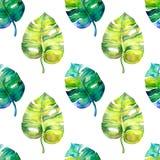 Безшовная картина акварели с листьями monstera Стоковые Фото