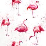 Безшовная картина акварели с фламинго Стоковая Фотография RF