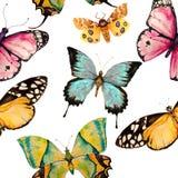 Безшовная картина бабочки Стоковое Изображение