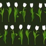 Безшовная картина белых тюльпанов покрашенных вручную на черной предпосылке В вертикальном положении Стоковая Фотография