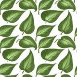 Безшовная картина больших листьев хост на белой предпосылке Иллюстрация цифров иллюстрация штока