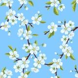 Безшовная картина вектора от ветвей яблони весны зацветая с белыми цветками и листьями Стоковое Изображение