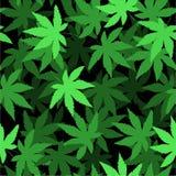 Безшовная картина вектора с марихуаной выходит, пенька, конопля Стоковое Фото