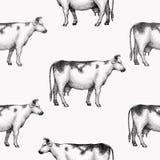 Безшовная картина вектора фермы Графический силуэт коровы, иллюстрации руки вычерченные винтажные Ретро предпосылка животноводчес иллюстрация штока
