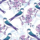 Безшовная картина вишни весны с птицами иллюстрация штока
