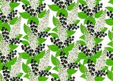 безшовная картина вишни птицы ягода и флористическая предпосылка иллюстрация штока