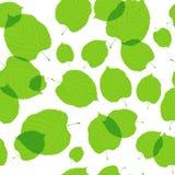 Безшовная картина зеленого цвета выходит на белизну Стоковое Фото