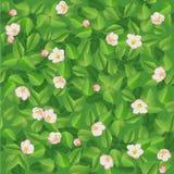 Безшовная картина зеленого цвета весны выходит с цветками Стоковое фото RF