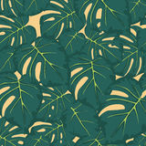 Безшовная картина зеленого цвета выходит monstera Стоковое Изображение