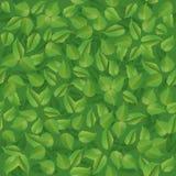 Безшовная картина листьев зеленого цвета лета Стоковое Фото