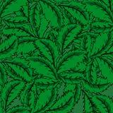 Безшовная картина листьев мяты Стоковое фото RF