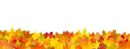 Безшовная картина листьев осени Стоковое Изображение
