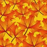 Безшовная картина кленового листа осени стоковая фотография rf