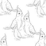 Безшовная картина крася семью какаду попугая нимфы Corella Стоковые Фотографии RF