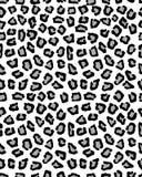 Безшовная картина леопарда Стоковое фото RF