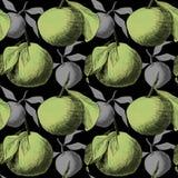 Безшовная картина: мандарины или яблоки, уникальные чертежи карандаша плодов совмещенных в красивые составы иллюстрация вектора