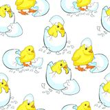 Безшовная картина младенец цыпленка hatchs яичка Illustr вектора Стоковые Изображения RF
