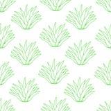 Безшовная картина от зеленого алоэ на белой предпосылке бесплатная иллюстрация
