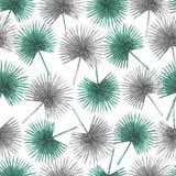 Безшовная картина от листьев ладони вентилятора Стоковые Изображения