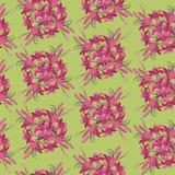 Безшовная картина от пунцового цветка Стоковая Фотография