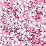 Безшовная картина от цветя ветвей абрикоса Стоковые Фото