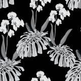 Безшовная картина, предпосылка с листьями чудовища и цветки орхидеи на черной предпосылке бесплатная иллюстрация