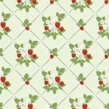 Безшовная картина, предпосылка милых красных ягод салатовая Стоковая Фотография