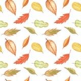 Безшовная картина при листья осени рисуя акварелью, рукой нарисованные элементы Стоковая Фотография RF