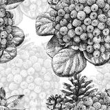 Безшовная картина при различные заводы нарисованные вручную с чернотой Стоковые Изображения