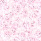 БЕЗШОВНАЯ картина розовых цветений пиона Стоковые Фото