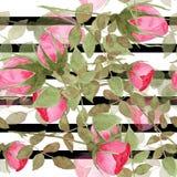 Безшовная картина роз акварели на striped иллюстрация штока