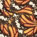 Безшовная картина сделанная от крыла бабочки монарха для предпосылки Стоковая Фотография RF