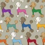 Безшовная картина собак пуделя Стоковые Фотографии RF
