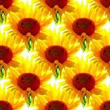 Безшовная картина солнцецветов на белой предпосылке Стоковая Фотография