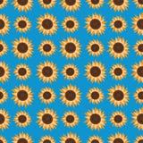 Безшовная картина солнцецветов, на свете - голубой предпосылке Стоковая Фотография RF