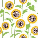 Безшовная картина, солнцецвет Стоковые Изображения