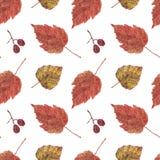 Безшовная картина, сушит листья и ягоды на белизне Стоковое Изображение